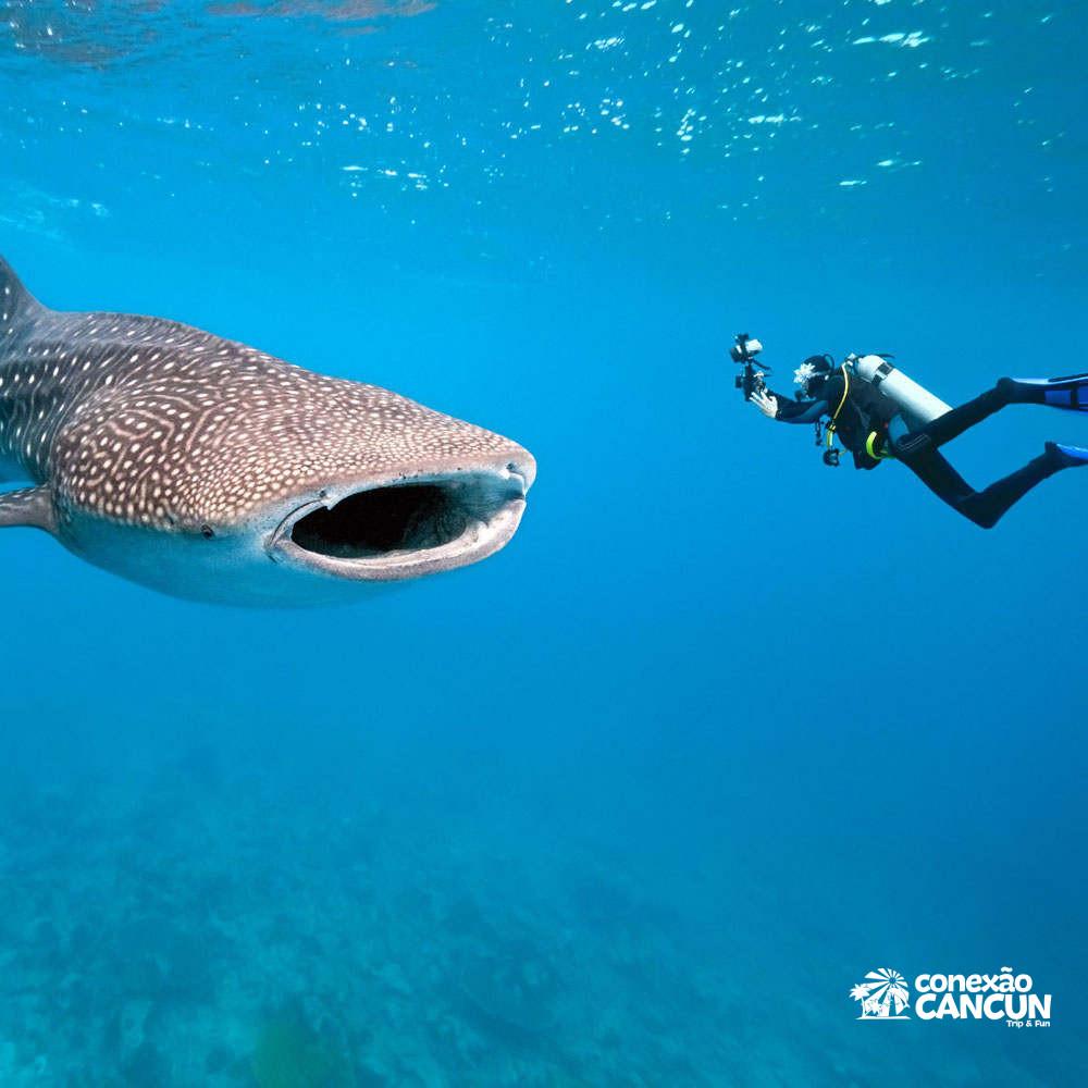 Mergulhos Com Tubarão E Baleia